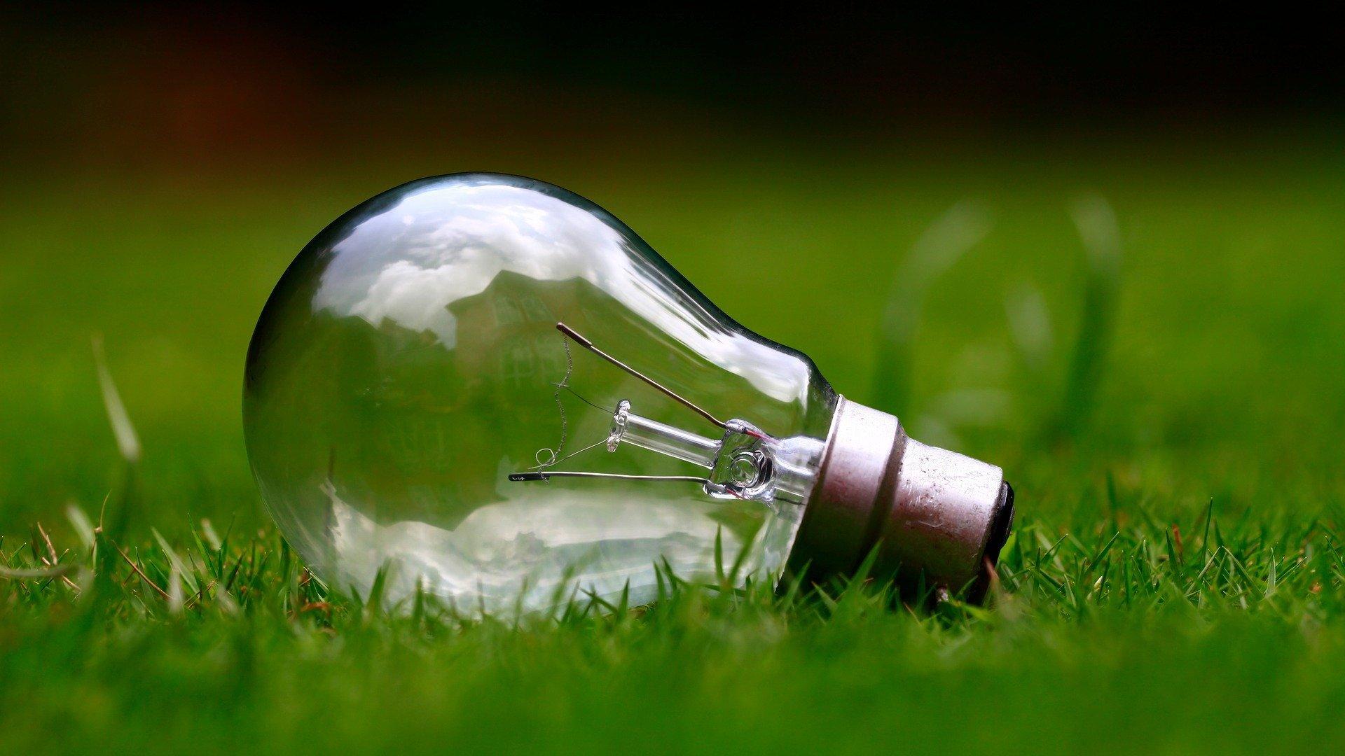 Ampoule dans l'herbe qui représente valeurs écologiques pour trouver un emploi