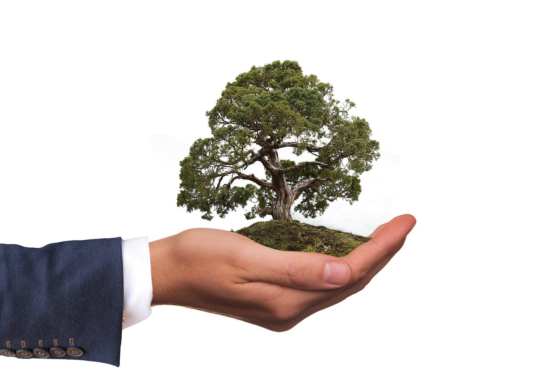 Un homme tient dans sa main un arbre qui représente ses valeurs écologiques dans sa quête de trouver un emploi